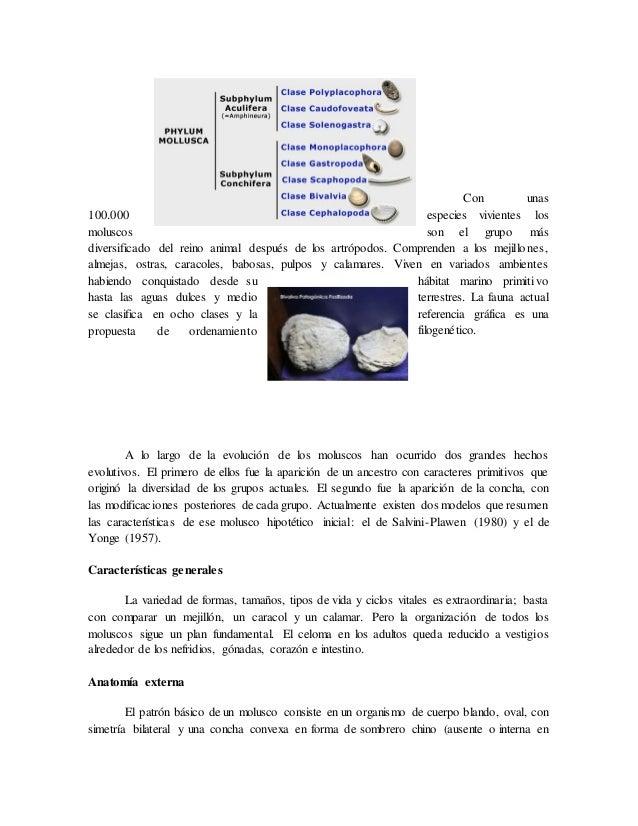 Contemporáneo Anatomía De Un Mejillón Fotos - Imágenes de Anatomía ...