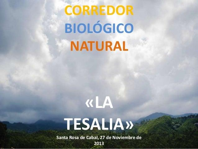 CORREDOR BIOLÓGICO NATURAL  «LA TESALIA» Santa Rosa de Cabal, 27 de Noviembre de 2013