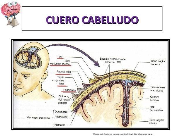 Exposicion de guia 1 neuro