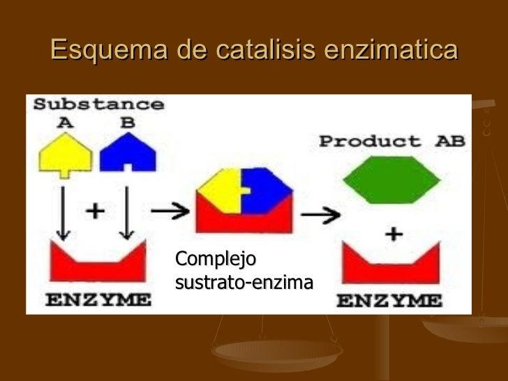 Esquema de catalisis enzimatica Complejo sustrato-enzima