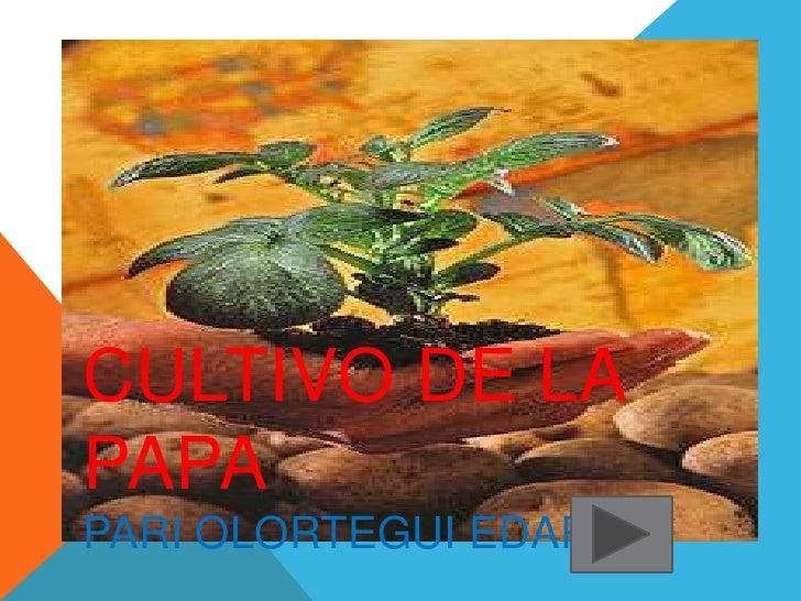 CULTIVO DE LAPAPAPARI OLORTEGUI EDAR