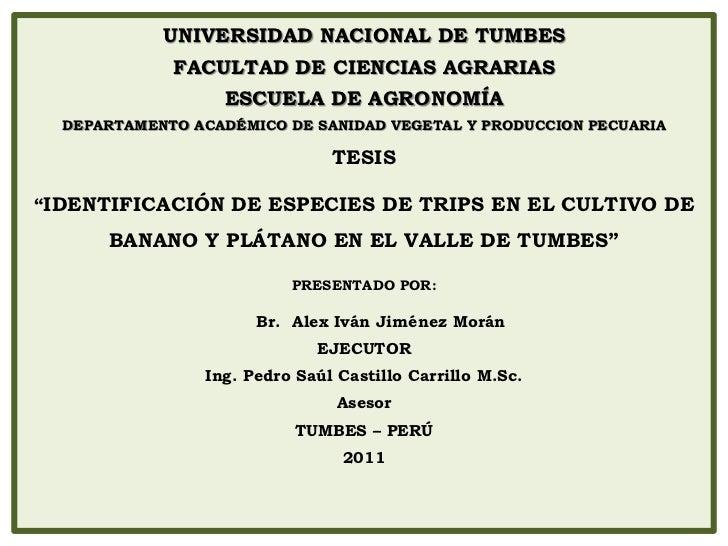 UNIVERSIDAD NACIONAL DE TUMBES             FACULTAD DE CIENCIAS AGRARIAS                  ESCUELA DE AGRONOMÍA  DEPARTAMEN...