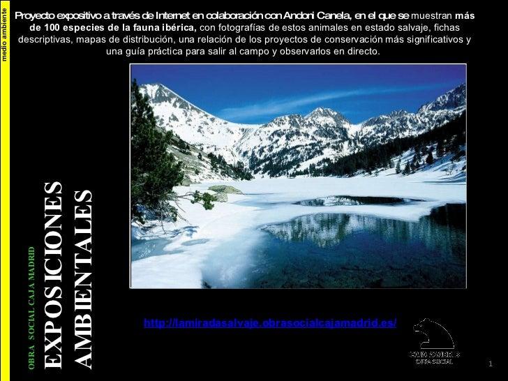 medio ambiente La Mirada Salvaje http :// lamiradasalvaje.obrasocialcajamadrid.es /