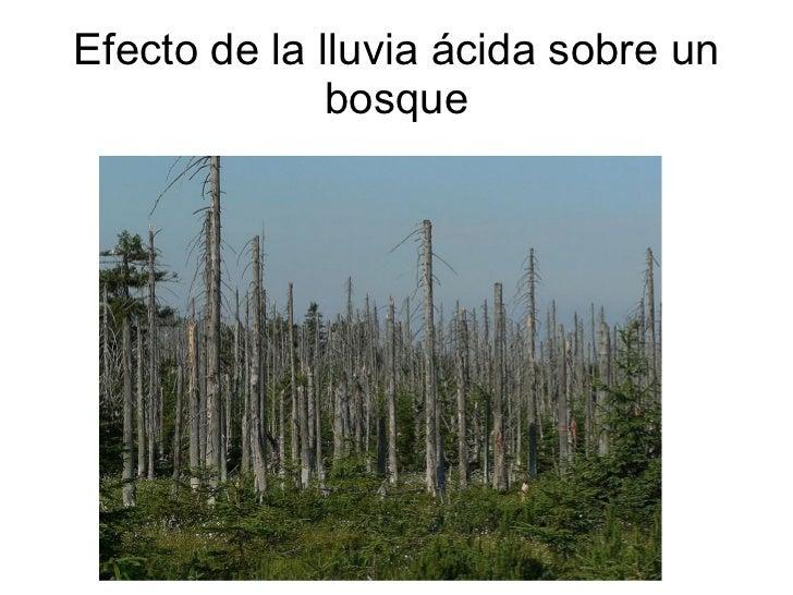 Efecto de la lluvia ácida sobre un bosque