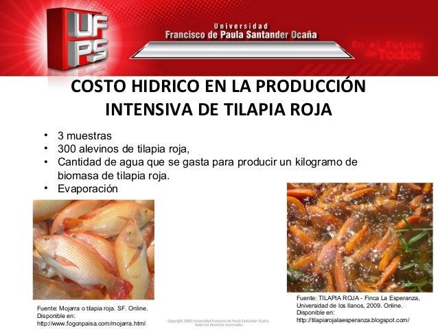 costo hidrico en la produccion intensiva de tilapia roja
