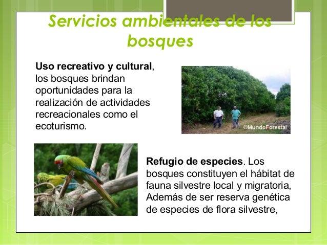 Exposicion tema proteccion de los suelos for Como se creo el suelo
