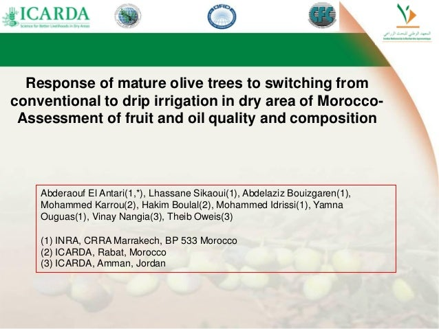 Response of mature olive trees to switching from conventional to drip irrigation in dry area of Morocco- Assessment of fru...