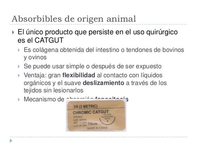 Absorbibles de origen animal  El único producto que persiste en el uso quirúrgico es el CATGUT  Es colágena obtenida del...