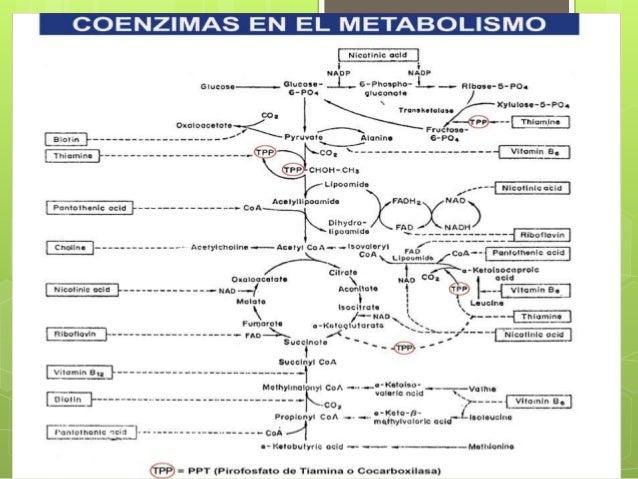 vitaminas hidrosolubles y liposolubles y funcion conenzimatica
