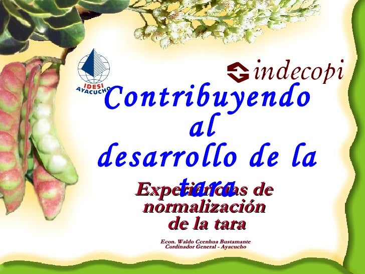 Experiencias de  normalización  de la tara Contribuyendo al  desarrollo de la tara Econ. Waldo Ccenhua Bustamante Cordinad...