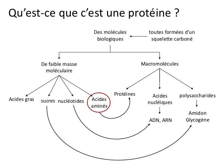 Qu'est-ce que c'est une protéine ?                                    Des molécules          toutes formées dun           ...
