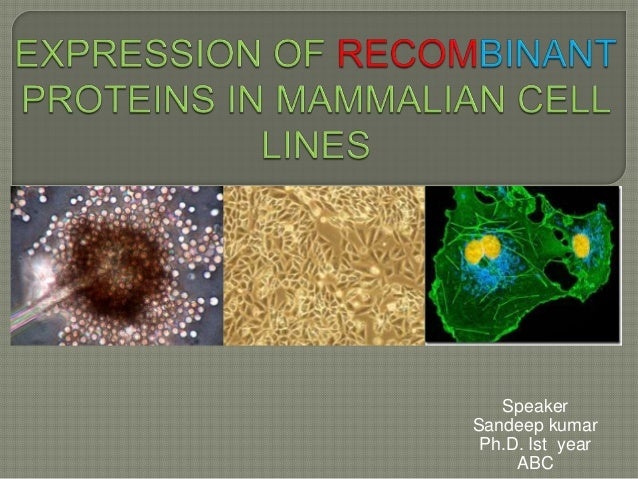 proteins from mammalian cells extraction Purification of total rna from mammalian cells and tissues (protocol summary only for purposes of this preview site) the following protocol, which has been adapted from life technologies/invitrogen's protocol for using trizol reagent, describes the use of a monophasic lysis reagent to isolate total rna from mammalian cells (grown as.