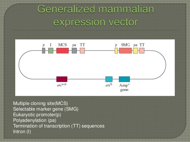 the hierarchical regulation of gene expression in mammalian cells Although variations in any step of gene expression can be regulatory, by far the most frequent form of gene control is the regulation of transcription initiation control of.