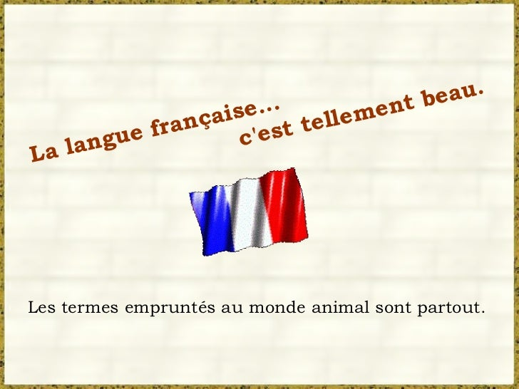 La langue française... c'est tellement beau. Les termes empruntés au monde animal sont partout.