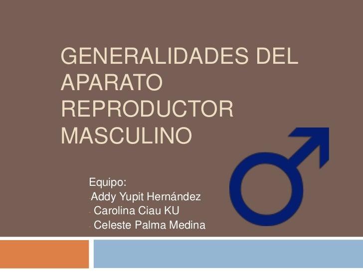 Generalidades del aparato reproductor masculino<br />Equipo: <br /><ul><li>Addy Yupit Hernández