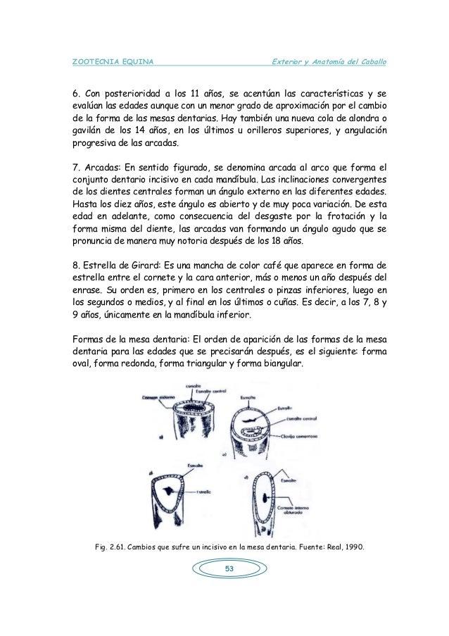 Exterior y anatomia del caballo