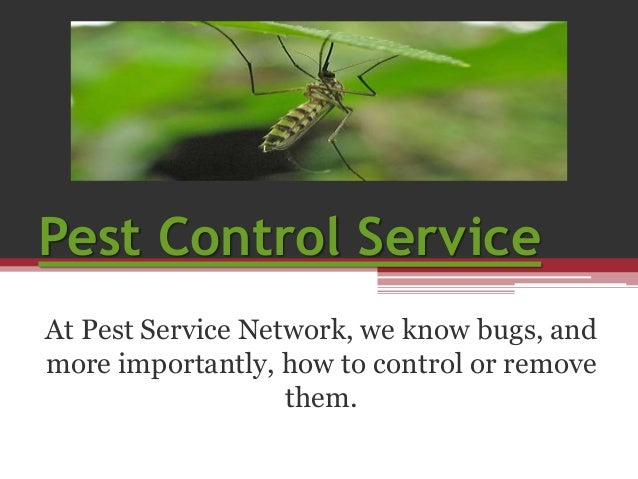Pest Control Service At Pest Service Network, we know bugs, and more importantly, how to control or remove them.