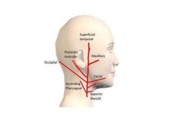 external carotid