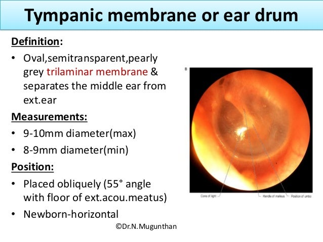 External Ear Tympanic Membrane And Auditory Tube Dr N