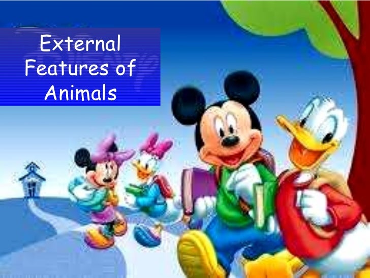External Features of Animals