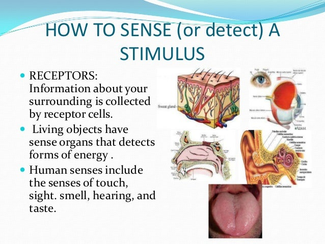 sensory reception stimulus and response A sensory receptor is a structure that reacts to a physical stimulus in the  environment, whether internal or external.