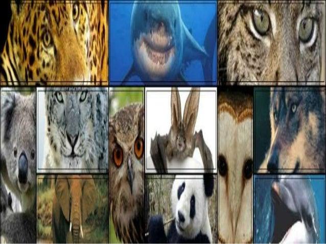 Introdução • Os seres vivos quando entregues à Natureza, vivem dentro de um perfeito equilíbrio ecológico mantido principa...