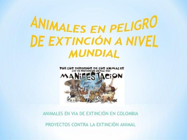 ANIMALES EN VIA DE EXTINCIÓN EN COLOMBIA PROYECTOS CONTRA LA EXTINCIÓN ANIMAL