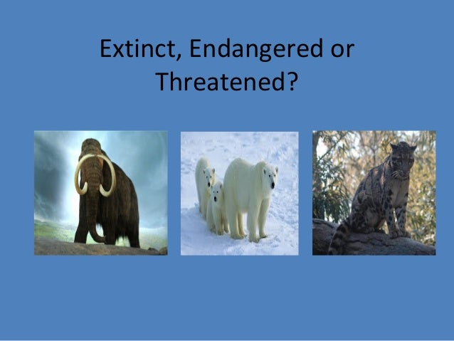 extinct  endangered or threatened