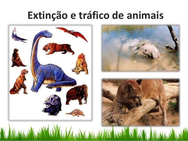Extinção e tráfico de animais