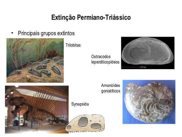 Extinção Permiano-Triássico• Principais grupos extintos                        Trilobitas                                 ...