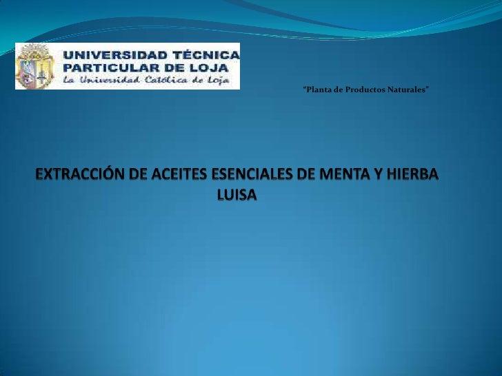 """""""Planta de Productos Naturales""""<br />EXTRACCIÓN DE ACEITES ESENCIALES DE MENTA Y HIERBA LUISA<br />"""