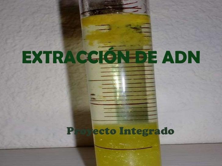 EXTRACCIÓN DE ADN Proyecto Integrado