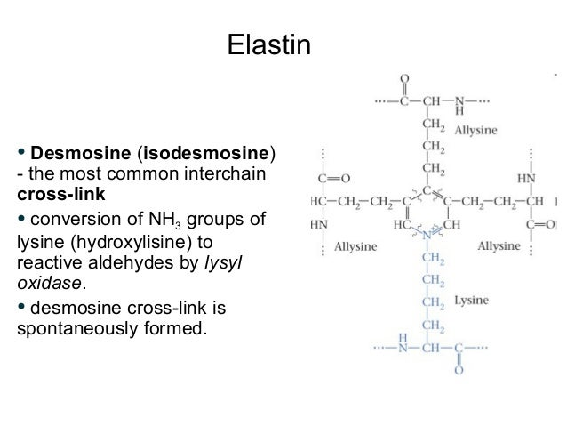 extracellular matrix