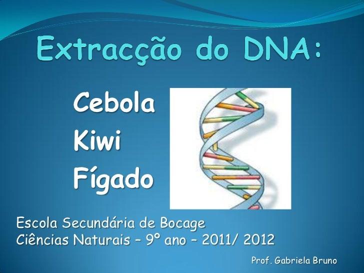 Cebola        Kiwi        FígadoEscola Secundária de BocageCiências Naturais – 9º ano – 2011/ 2012                        ...