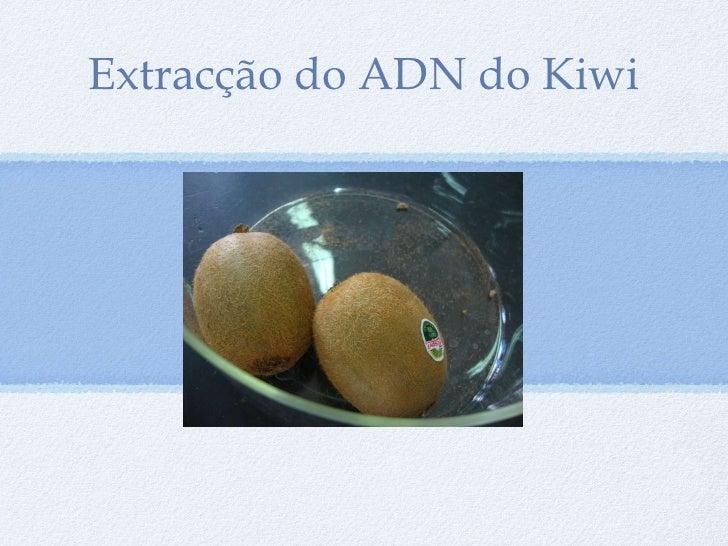 <ul><li>Extracção do ADN do Kiwi </li></ul>