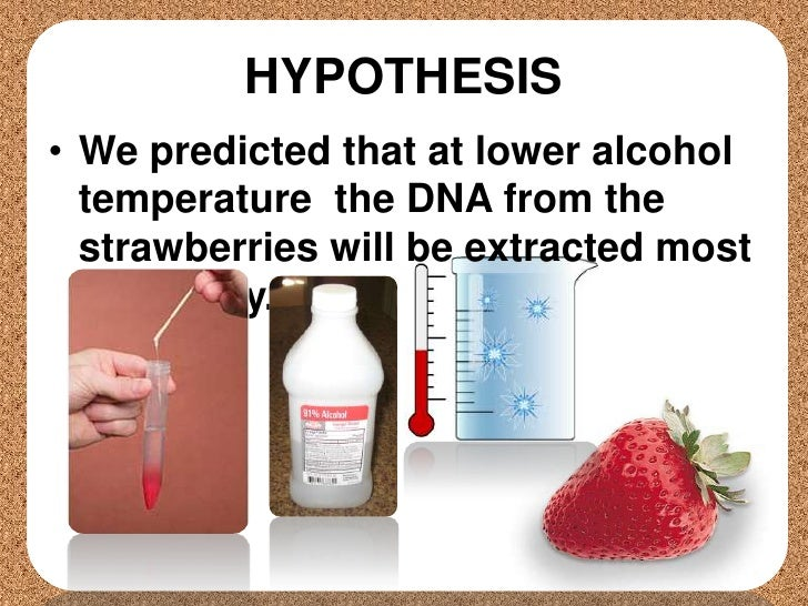strawberry dna extraction and quantitative hypothesis Make your own dna extraction kit from common household materials you will extract dna from strawberries and see clumps of dna extract dna from a strawberry.