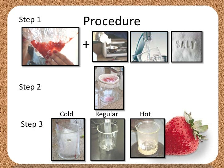 dna extraction from strawberries - alcohols essay Essay writing help service starting from $10 per page writing an essay is a vital  skill  buffer, gauze (cut into squares), glass funnel, ice cold isopropyl alcohol   strawberry dna extraction lesson plan lab report and/or discussion the yield of .
