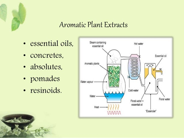 PHYTOCHEMICAL EXTRACTION