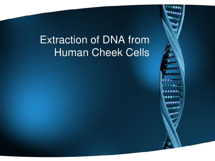 extracting dna from cheek cell Dna extraction from buccal swabs this section provides a general protocol for automated isolation of genomic dna from human buccal cell swabs in a 96-well.