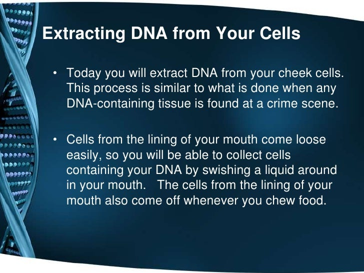 is more dna extracted from a The difference of the genomic dna extraction between animal & plant by keiron audain updated april 26, 2018 although genomic dna lives in the nucleus of cells, the amount and purity of extracted dna depends on the type and size of the cell.