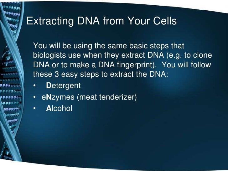 extraction of dna from cheek cells Summary: today was our dna lab students worked in pairs trying to extract  dna from human cheeks cells it's tricky cheek cells are large.