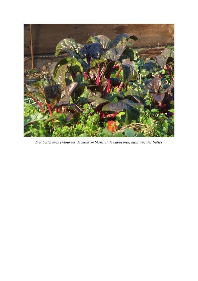 1èrepartie : Pourquoi apprendre le jardinage aux enfants ?Le jardinage est une activité complète et très enrichissante. En...