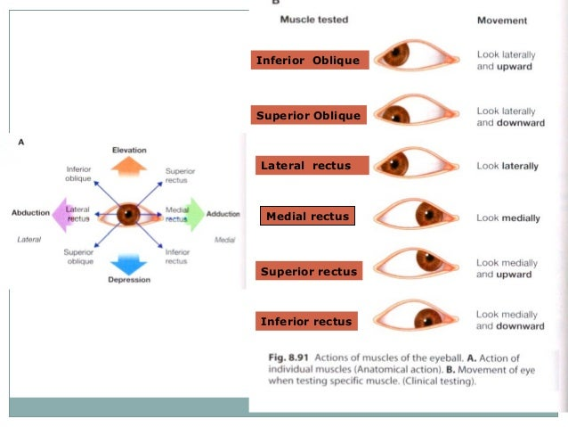 Horner s syndrome anatomy and physiology