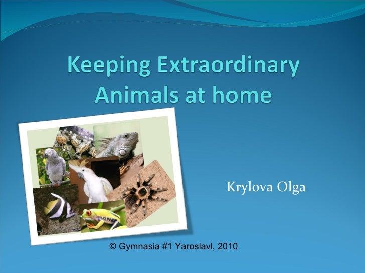 Krylova Olga © Gymnasia #1 Yaroslavl ,  2010