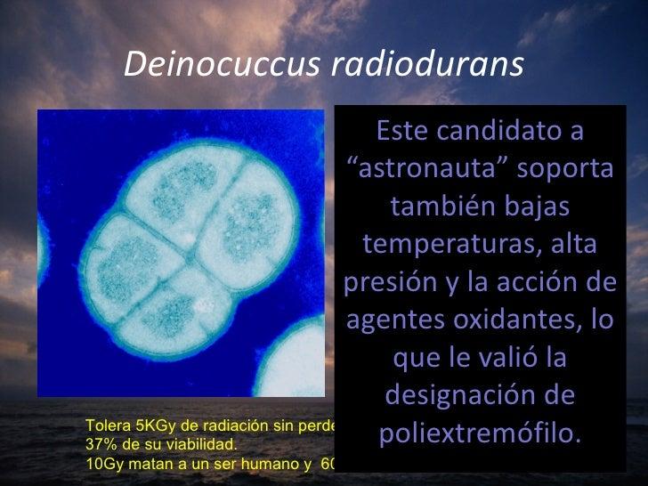 Resultado de imagen de Extrem´pfilos que soportan la radiación