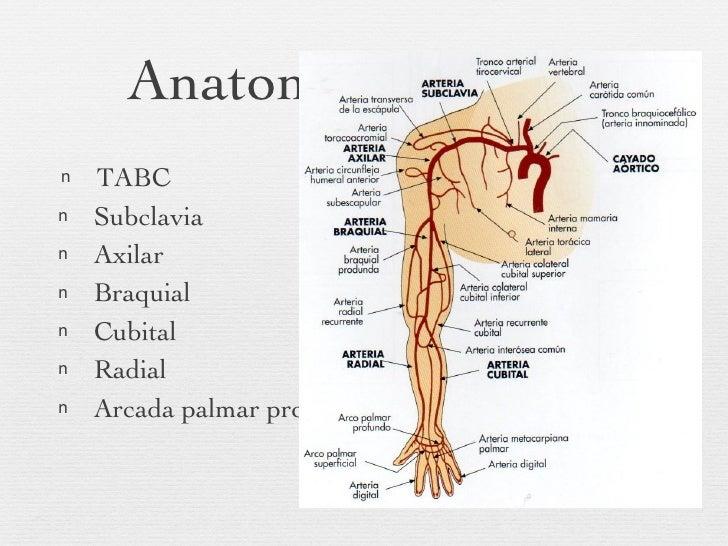 Famoso Extremidad Superior De Ultrasonido Anatomía Venosa Bandera ...