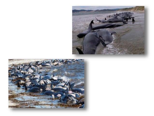 Exxon Valdez Oil Spill Disaster Fact Sheet