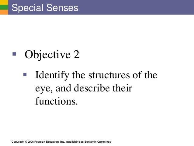 Copyright © 2006 Pearson Education, Inc., publishing as Benjamin Cummings Special Senses  Objective 2  Identify the stru...