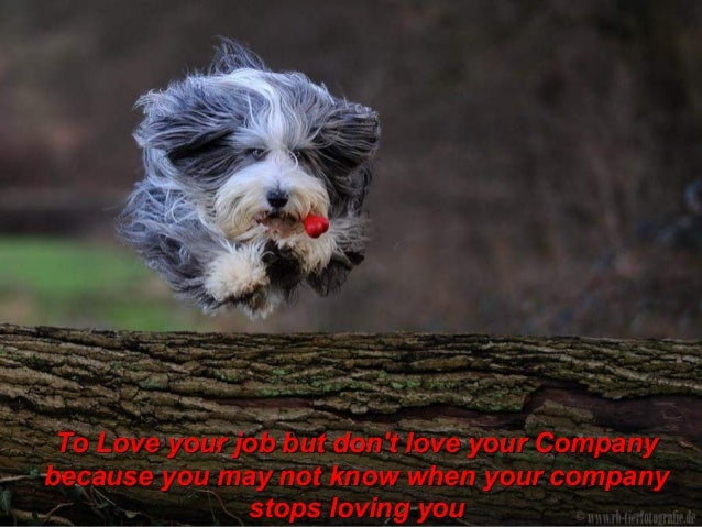 To Love your job but dont love your Companybecause you may not know when your company               stops loving you