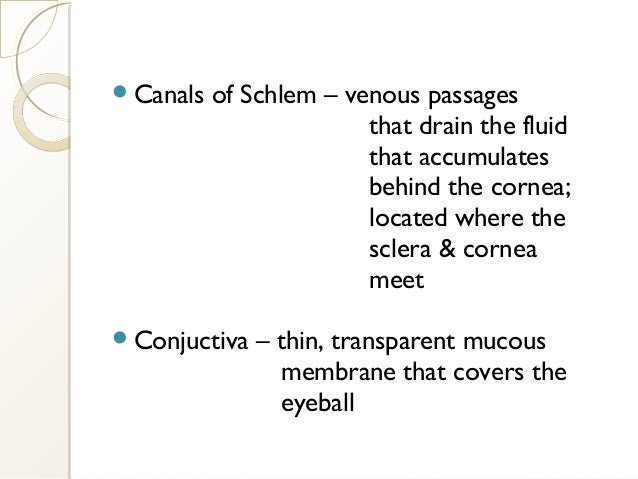 Canals of Schlem – venous passages that drain the fluid that accumulates behind the cornea; located where the sclera & co...